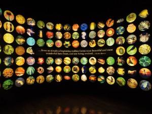進化の過程で出現した様々な生物の多様性とその美しさ
