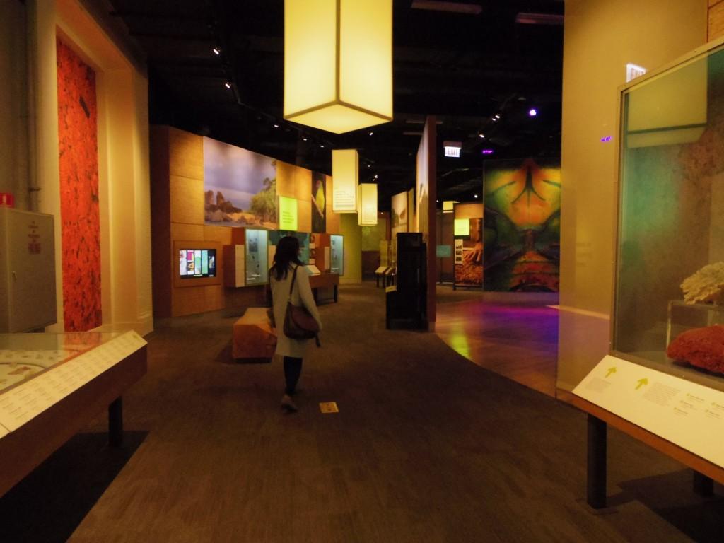 展示内容もさることながら、空間としても美しい